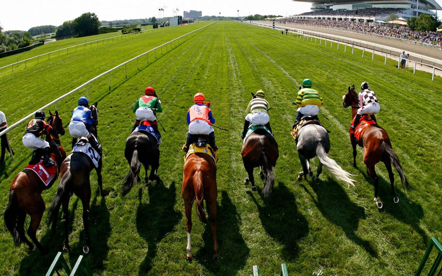 The Best Horse to Bet on Horses